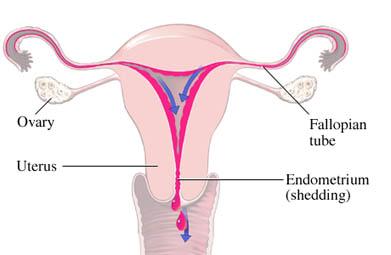 Flujo menstrual