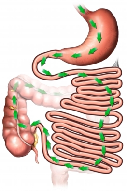Conductos digestivos