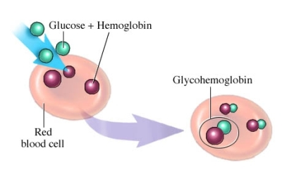 glucose and RBC