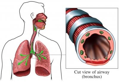 Recorrido respiratorio