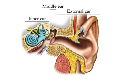 si55550968_97870_1_regions_ear
