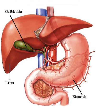 AC00035-nl_gallbladder and liver.jpg