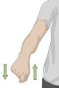 Cómo realizar ejercicios activos para la amplitud de los movimientos_5a