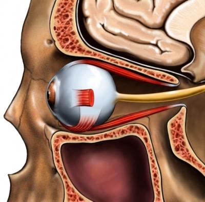 Eye bone socket nerve