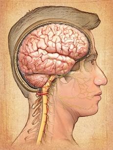 Vías nerviosas cerebrales