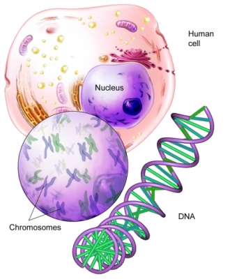 Chromosome_DNA
