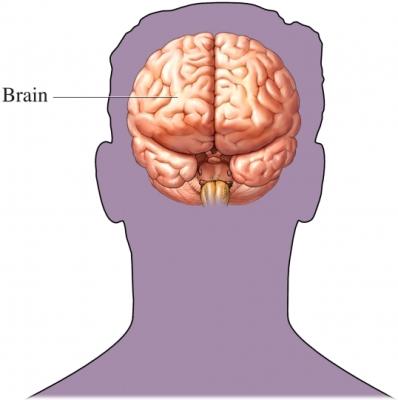 Brain in silhouette