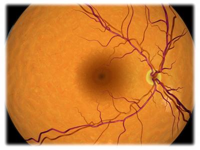 Retina of the Eye