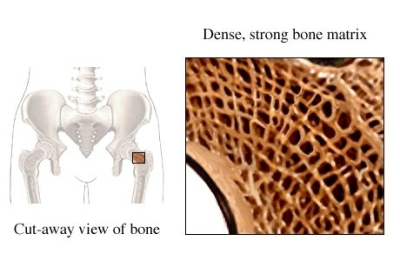 Bone Matrix