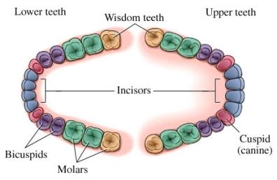 si55551348_97870_1_wisdom_teeth