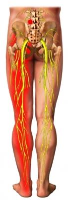 Nervios de la pierna