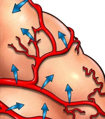 Flujo sanguíneo cerebro