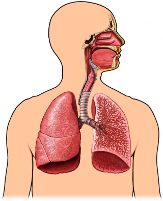 Air pathway breathing