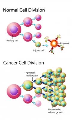 División de las células carcinógenas
