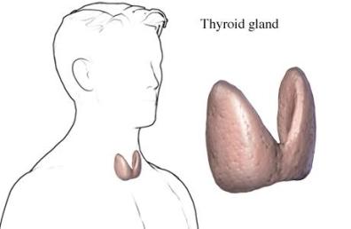 glándula tiroidea masculina