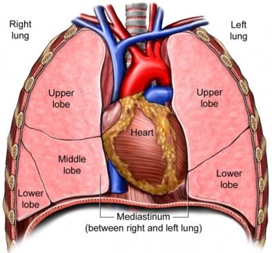 BQ00042_97870_1_Regions_Lung
