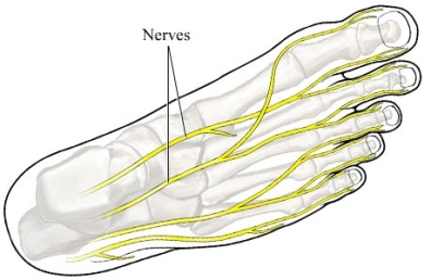 si55550740_97870_1_nerves_foot