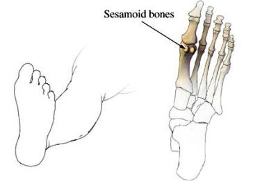 sesamoid bone foot