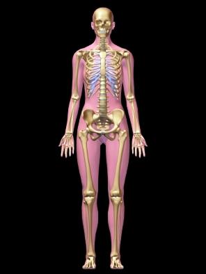women skeleton