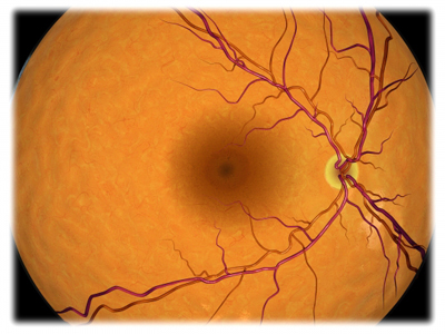 Retina of the Eye