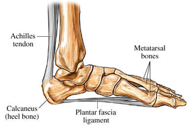 parte inferior frontal de la diabetes dolorida en el pie