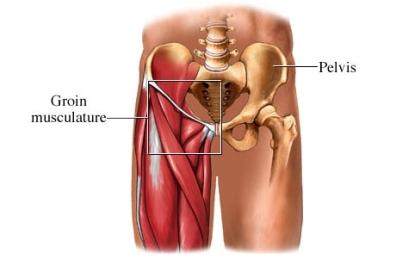 Músculo inguinal