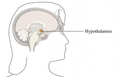 Hipotálamo