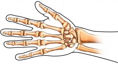 Los huesos de la mano