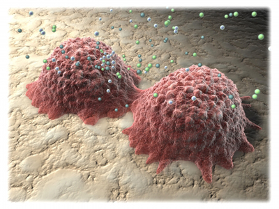Two Osteoblasts